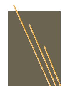 Whole Grain Spaghettini