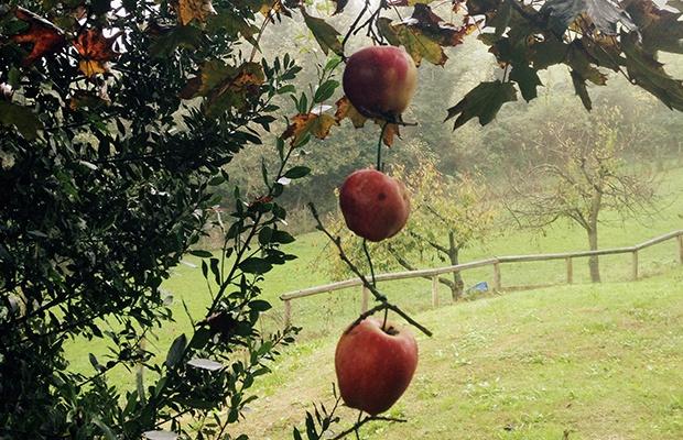 3 idee per per decorare con le mele