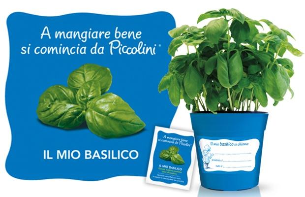 Piccoli coltivatori di basilico crescono!