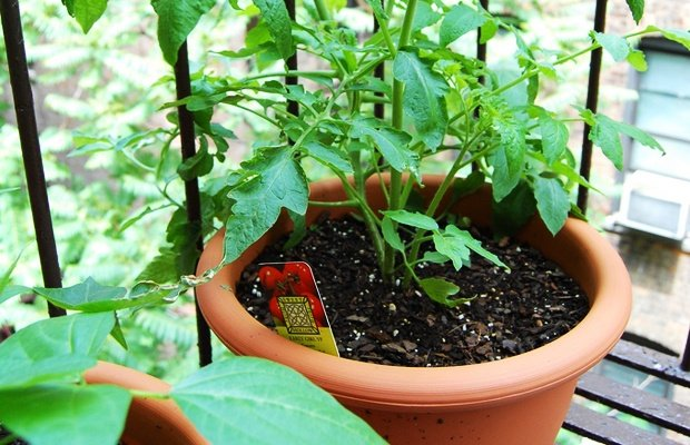 Per fare un orto ci vuole un seme (e anche qualcuno di più)
