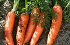 Il beta-carotene è l'artista della natura che colora frutta e verdura