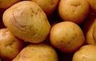 Sapete che le patate non possono essere considerate delle verdure?