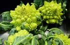 Broccoli: alberelli verdi che aiutano a prevenire molte malattie degenerative