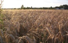 La segale è un cereale che contiene molta fibra utile, usiamolo più spesso!