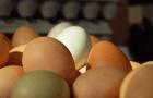 L'uovo: un alimento molto nutriente perchè ricchissimo di proteine