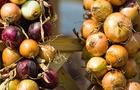 La cipolla: ricca di potassio, vitamina B e polifenoli
