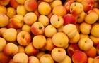 Albicocche: dolcissime e ricchissime di vitamine e minerali