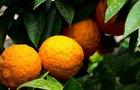 Le arance: intere o spremute sono una fonte ricca di vitamina C!
